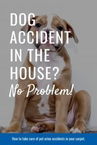 dog accident no probem