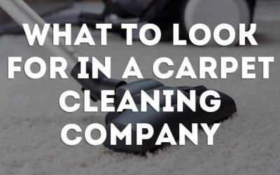 What To Look For In A Carpet Cleaner