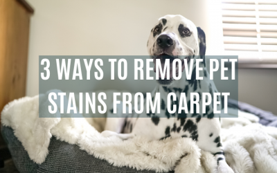 3 Ways to Remove Pet Urine from Carpet
